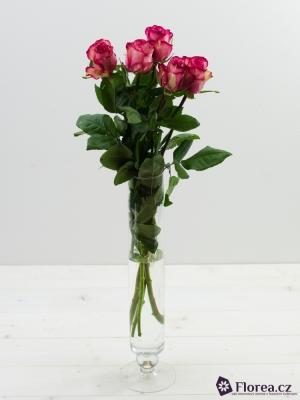 Růžová růže CLOWN 60cm