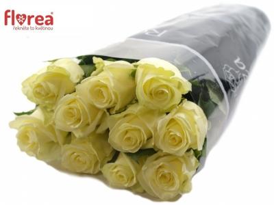 ROSA MAGADI+ 70cm (M)