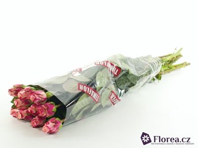 ROSA N-TIRE 70cm