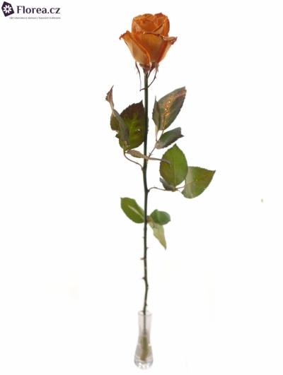 Oranžová růže ORANGE GLITTER VENDELA 70cm
