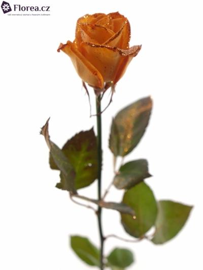 ROSA ORANGE GLITTER VENDELA 70cm