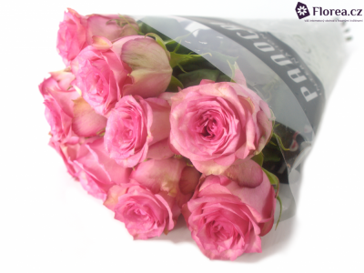 ROSA PINK SHADOW 60cm