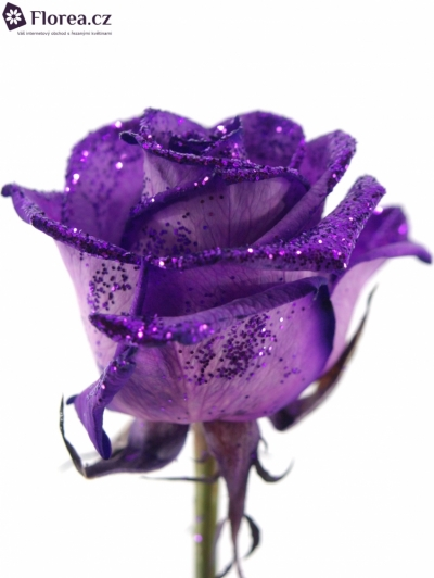 ROSA PURPLE GLITTER VENDELA 70cm
