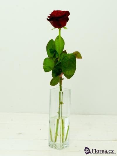 ROSA RED DESIRE 70cm