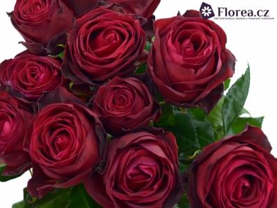 ROSA RED DESIRE 40cm