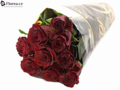 ROSA RED ONE 60cm