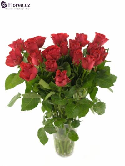 Červená růže RED SKY 50cm