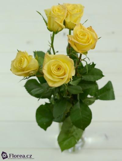 Žlutá růže SKYLINE 60cm