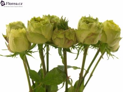 ROSA TOP DESIGN 70cm