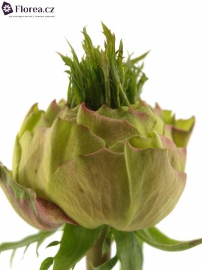 Žlutá růže TOP DESIGN 60cm