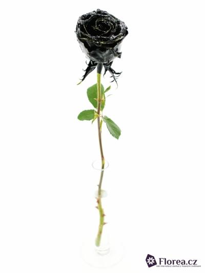Bílá růže WAX BLACK GLITTER 50cm