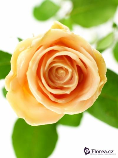 Oranžová růže WAX PEACH 70CM