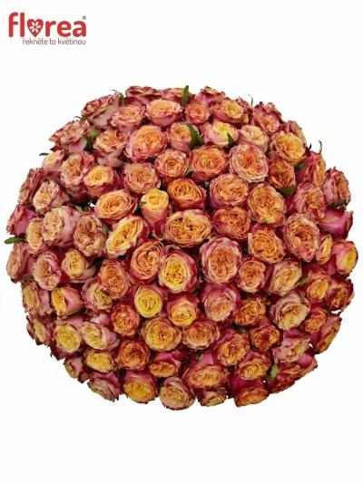 100 růží ROSA HURRICANE