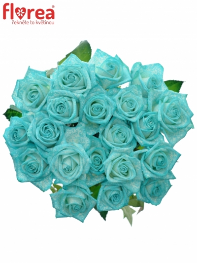 ROSA ICE BLUE VENDELA