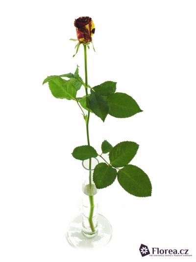Červená,žlutá růže ABRAKADABRA 40cm