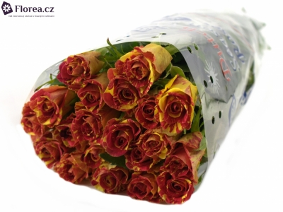 ROSA WIZARD 45cm