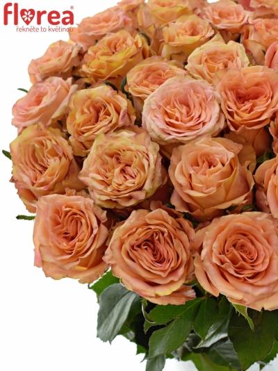 ROSA LOVE PEARL 40cm (L)