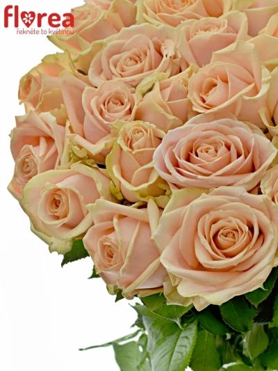 ROSA PEARL AVALANCHE+ 55cm