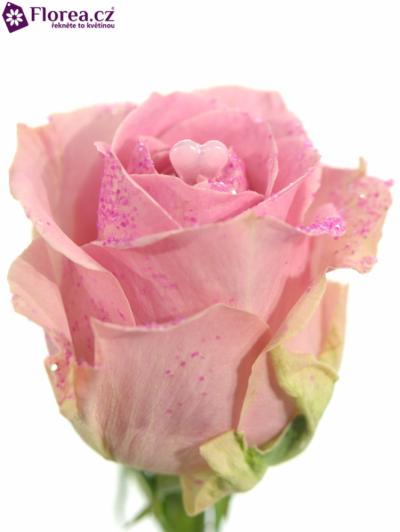 ROSA PINK DIAMOND PINK LOVE 60cm (L)