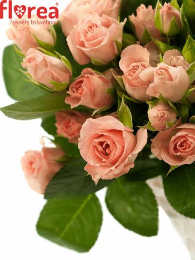 Rosa Pink Irischka