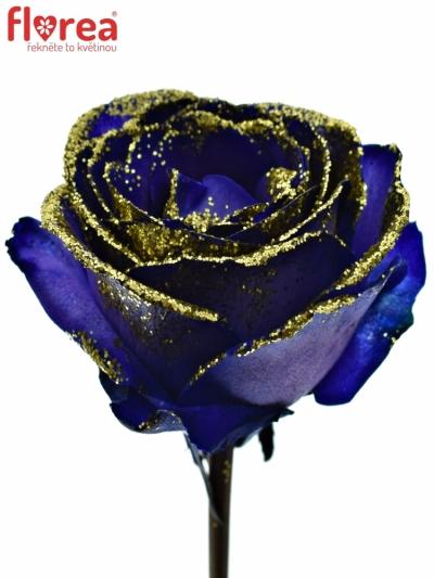 ROSA PURPLE VENDELA GOLD GLITTERS 50cm (M)