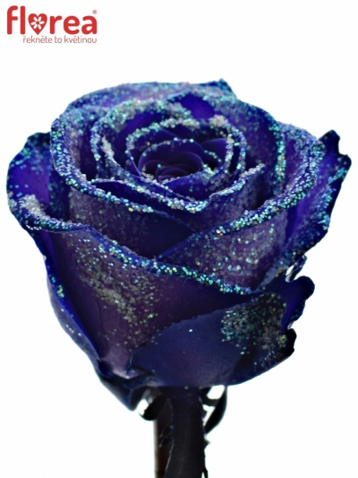 ROSA PURPLE VENDELA LIGHT BLUE GLITTERS 60cm (M)