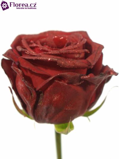 Rudá růže RED NAOMI! GLITTER LOVE 70cm (L)