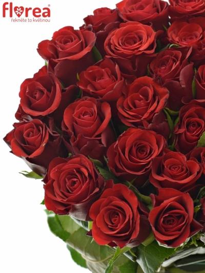 ROSA RED RIBBON