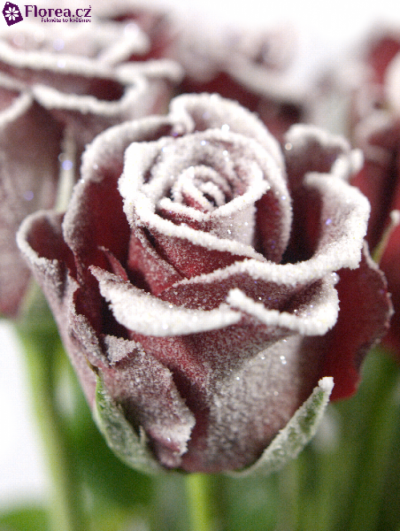 ROSA RED RIBBON FROST 50cm (M)