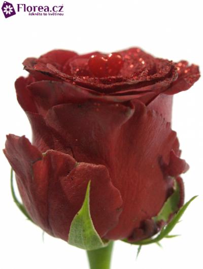 ROSA RHODOS GLITTER LOVE 60cm (L)