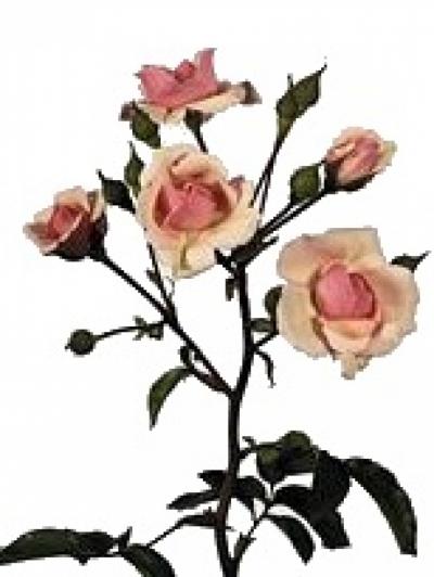 Oranžová růže DIADEEM 50cm/3+