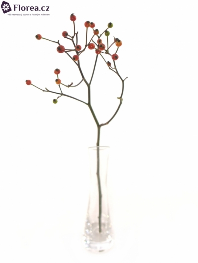 ROSA TWINKLE HIPHOP 36cm