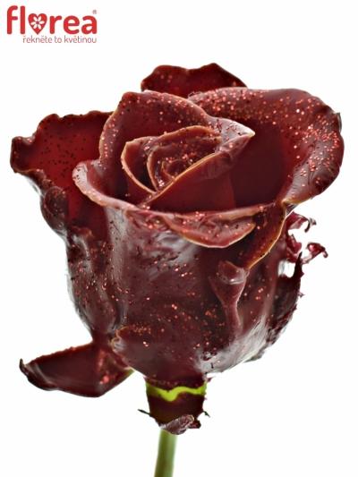 ROSA WAX RED GLITTERS 50cm (L)
