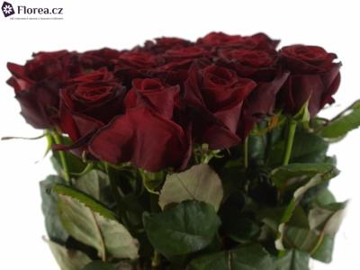 ROSA GRAND PRIX 40cm