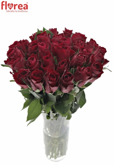 ROSA MADAM RED 70cm (L)