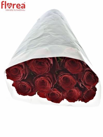 ROSA MONTE CARLO 70cm (XL)