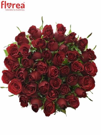 Rudá růže PRESTIGE