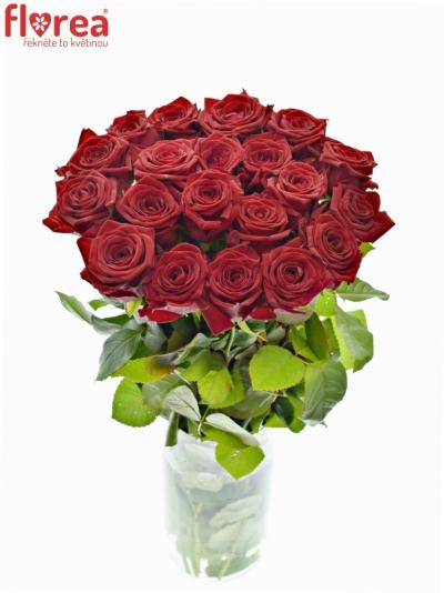 Rudá růže RED NAOMI!