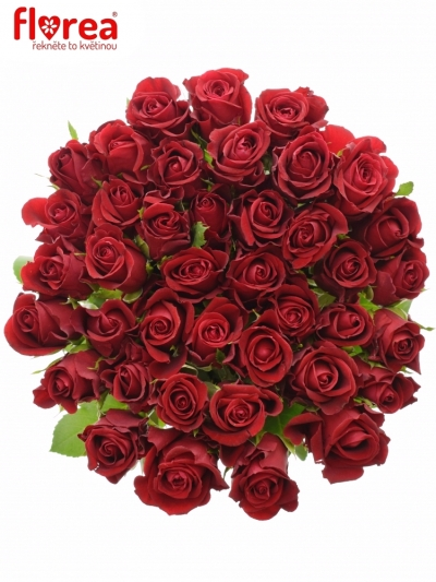Rudá růže RED TIFFANY