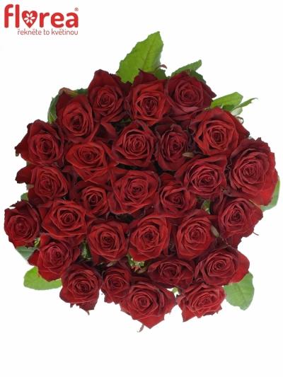 Rudá růže TESTAROSSA