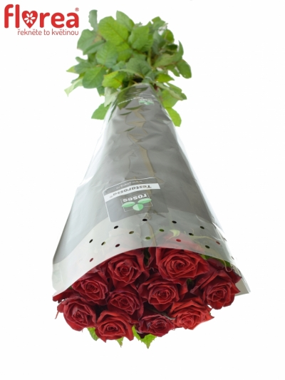ROSA TESTAROSSA 70cm (L)