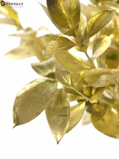 RUSKUS IZRAEL GOLD 60cm