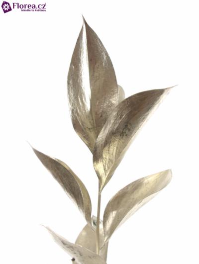 RUSKUS IZRAEL PLATINUM 60cm