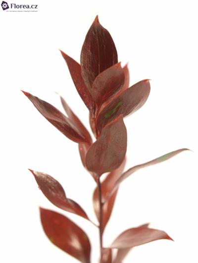 RUSKUS IZRAEL RED +GLITTERS 50cm