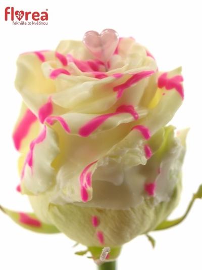Čokoládová růže CHOCOLAT ROSEBERRY LOVE 70cm (L)