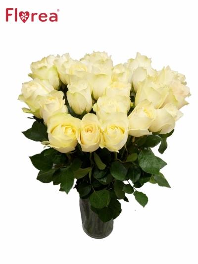 Růže CREAMIT