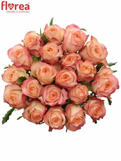 růže Grand Turismo