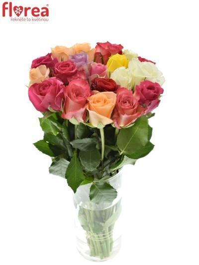 Růže MIX 35cm