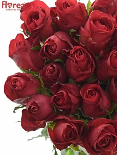 Růže RED COPACABANA 50cm (XL)