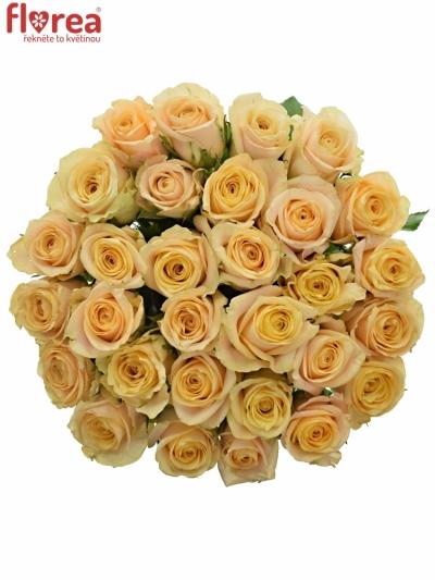 Růže Top Fair!